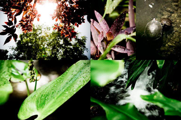 Gibraltar Botanical Gardens
